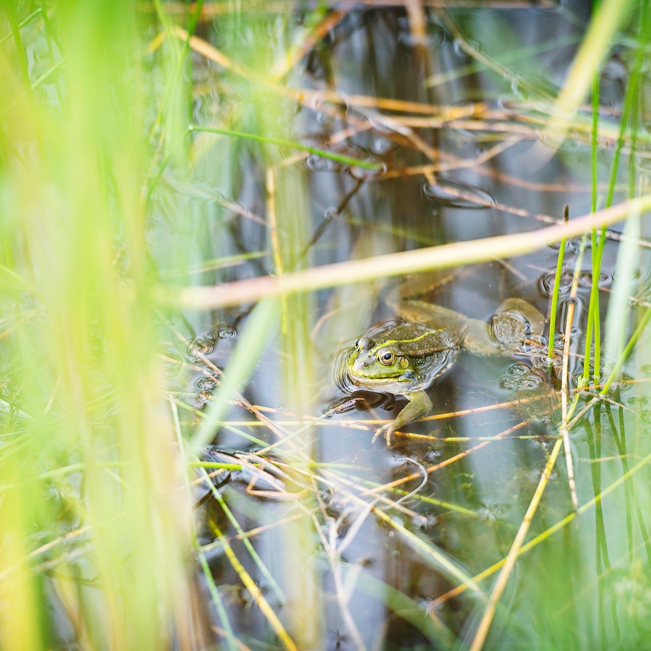 Een kikker in het frontenpark. CNME Maastricht en regio Centrum voor Natuur- en Milieueducatie